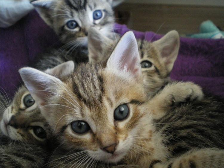 Lesbičky mačička šťava pusy horúce