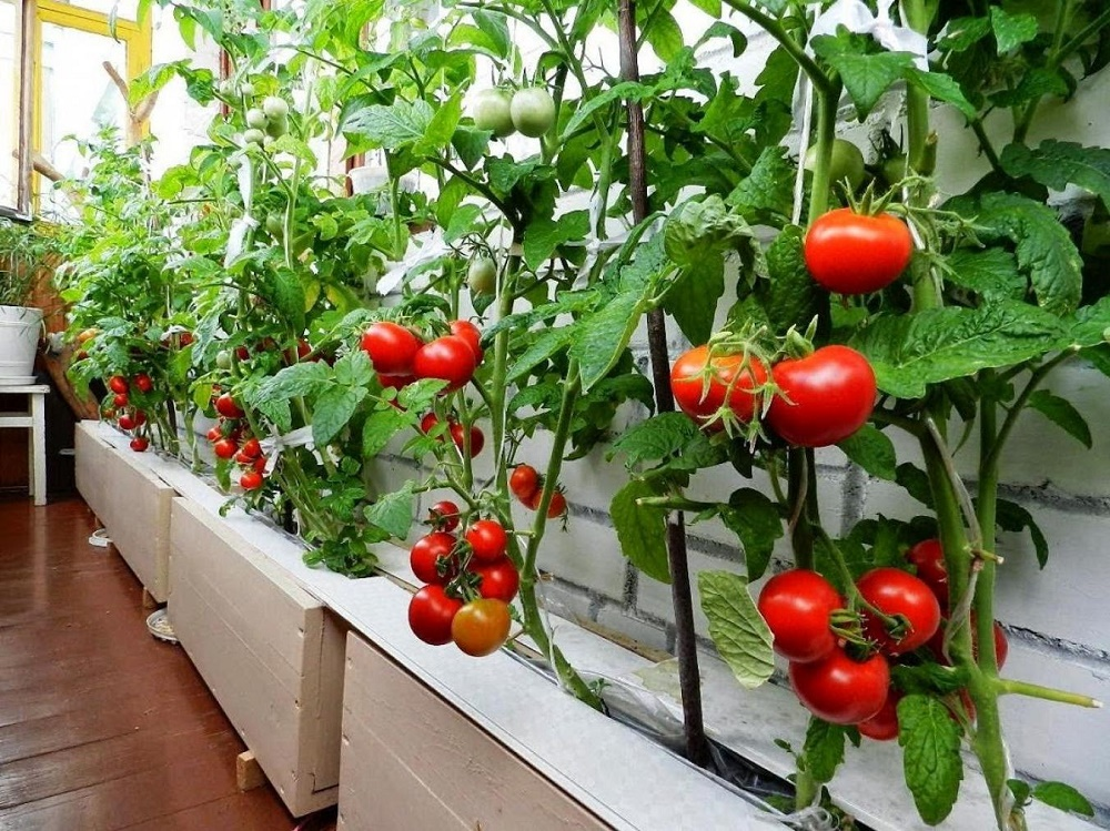 mu k ty nahradili zelenina a ovocie urban gardening funguje aj na slovensk ch balk noch. Black Bedroom Furniture Sets. Home Design Ideas